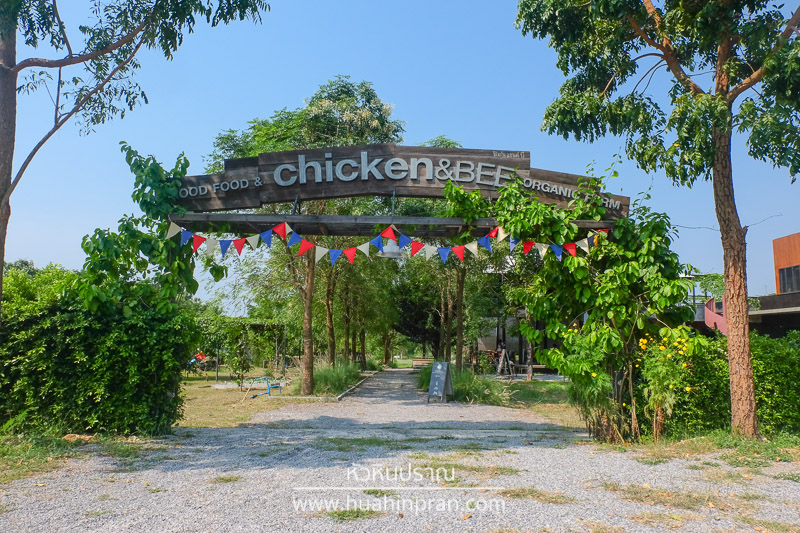 chicken and bee pranburi